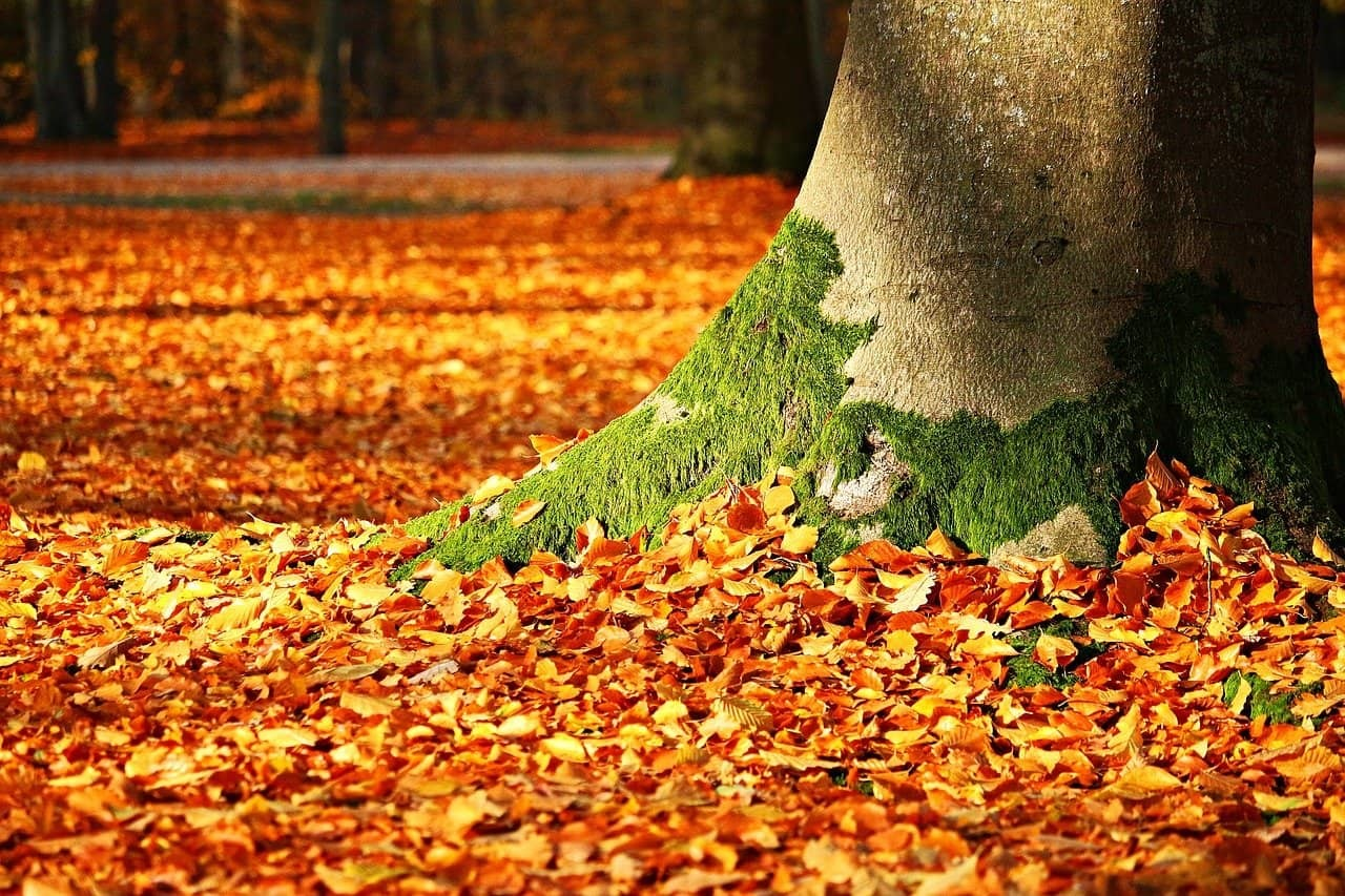 Autumn Leaves The London Shutter Company